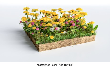 3D Illustration Square of grass flowers field on white background