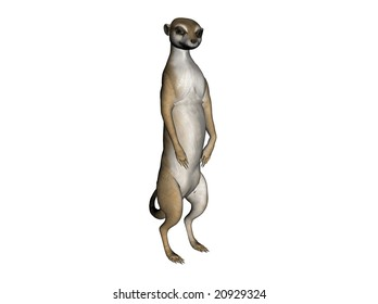 3D Illustration of a standing meerkat