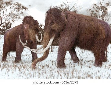 A 3-D illustration of two Woolly Mammoths grazing in a snow-covered grassy field during the ice age (45,000 years ago).