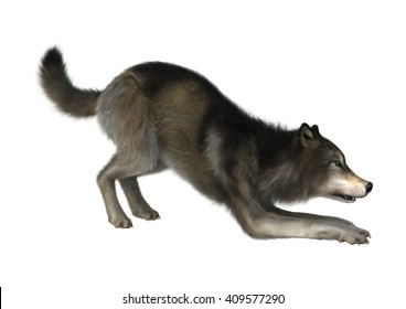 3D Illustration of a wild wolf isolated on white background