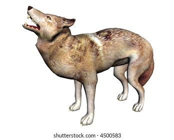 3D Illustration of a wolf