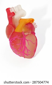 3d printed human heart on white background