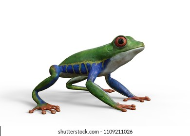 3d render of an Amazon red eyed tree frog standing, isolated against a white background.
