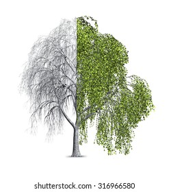 3d render of a Bay Willow tree that is shown as half bare, and half with leaves.