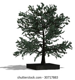 3D Render of a bradleaf tree with shadow and clipping path over white