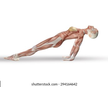 3D render of a female figure with spine in yoga position