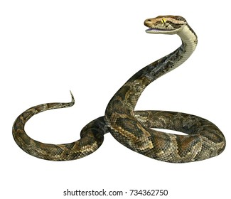 3d render of a golden giant python snake isolated on white