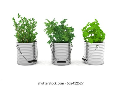 3d render - herbs - basil, thyme, parsley - over white background