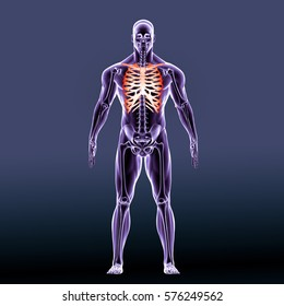 3d render of human body skeleton anatomy
