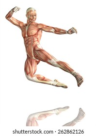 3D render of a male figure in kick boxing pose with detailed muscle map
