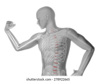 3D render of a male medical figure flexing arm