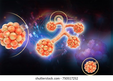 3d rendered alveoli in color background