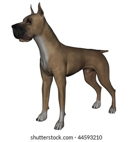 3D rendered great dane dog on white background isolated