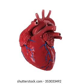 3d rendered human heart isolated on white background.
