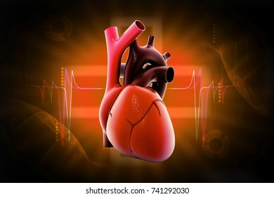 3d rendered human heart isolated on color background