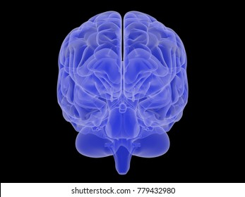 3D rendered illustration of a brain in blue on a black background from different angles