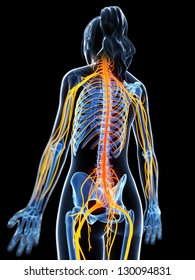 Human nervous system images stock photos vectors shutterstock 3d rendered illustration of the female nervous system ccuart Image collections