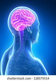 3d rendered illustration - male brain