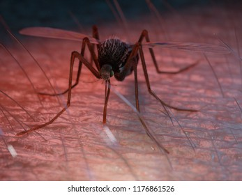 3d rendered illustration of a mosquito sucking blood