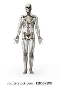 3d rendered illustration - skeleton
