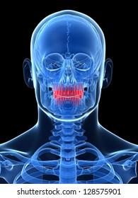 3d rendered illustration - teeth