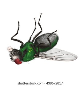 "3D Rendered Lucilia Sericata ""Common Green Bottle Fly"""
