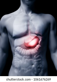 3d rendered medically accurate illustration of the human stomach