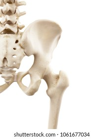 3d rendered medically accurate illustration of the human skeletal hip
