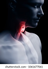 3d rendered medically accurate illustration of the human thyroid gland
