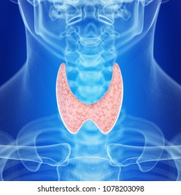 3d rendered medically accurate illustration of the healthy thyroid gland
