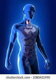 3d rendered, medically accurate illustration of the thyroid