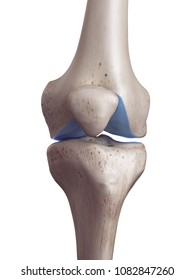 3d rendered, medically accurate illustration of the knee cartilage