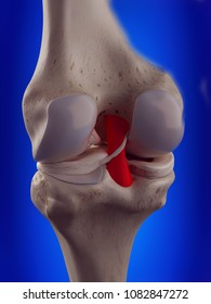 3d rendered, medically accurate illustration of the posterior cruciate ligament