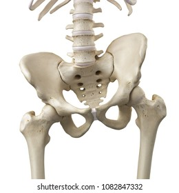3d rendered, medically accurate illustration of a tilted pelvis