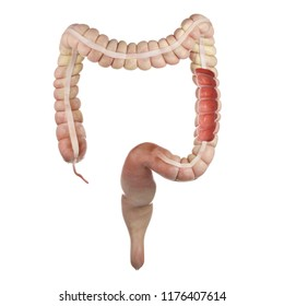 3d rendered medically accurate illustration of the interior colon