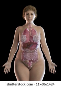 3d rendered medically accurate illustration of an obese womens organs
