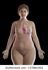 3d rendered medically accurate illustration of an obese womens heart