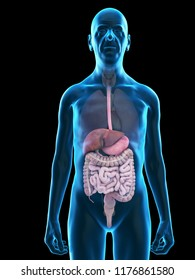 3d rendered medically accurate illustration of an old mans digestive