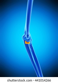 3d rendered, medically accurate illustration of the oblique bandetral ligament