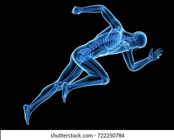 3d rendered medically accurate illustration of a sprinter