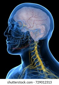 3d rendered medically accurate illustration of the Alveolar Nerve