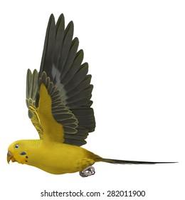 """3D Rendered Melopsittacus Undulatus """"Budgerigar Yellow"""""""