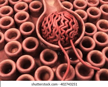3d rendered Nephrons