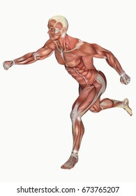 3d rendering anatomical muscle man running isolated on white