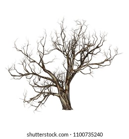 3D rendering of a dead red gum tree isolated on white background