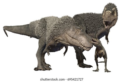 3D rendering of a feathered Tyrannosaurus Rex family, isolated on a white background.