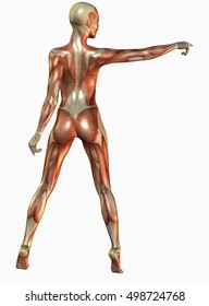 3d rendering flayed woman show something with her extended arm isolated on white