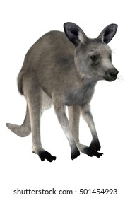 3D rendering of a gray kangaroo isolated on white background