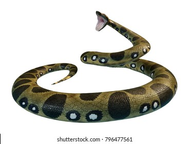 3D rendering of a green anaconda or Eunectes murinus or common anaconda or water boa isolated on white background