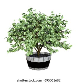 3D rendering of a green homeplant in a wooden pot isolated on white background